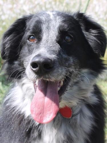 Lucky wurde nach vielen Jahren erneut im Tierheim abgegeben.