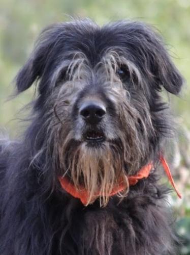 Der Zottel mit dem weichen Herz bewirbt sich als Familienhund.