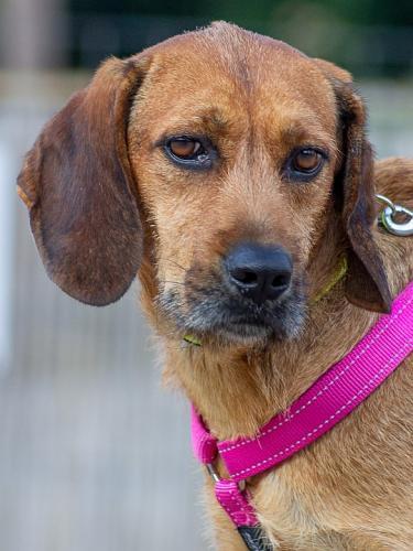 Vorsichtige Mara sucht eine hundeerfahrene Familie mit Geduld