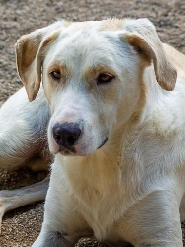Junghund mit Handicap sucht passende Familie