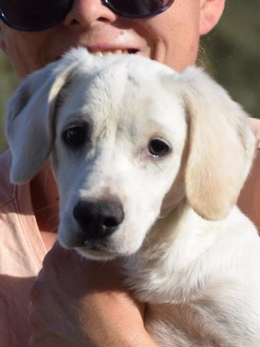 kleiner Wirbelwind liebt Hunde und Menschen