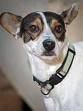 Unsicherer Rüde sucht erfahrene Halter die ihm den Weg ins normale Hundeleben zeigen.