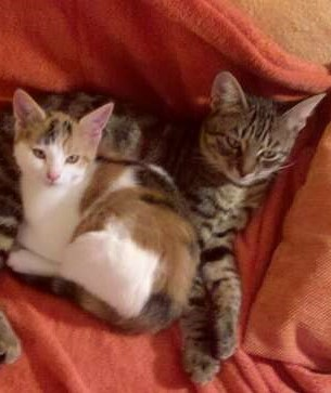 zwei verschmuste Katzen suchen Pflegestelle für 1 - 2 Jahre
