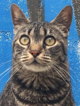 Die liebenswürdige Katzendame Laura will endlich für immer ankommen!