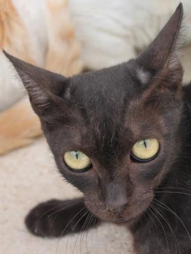 Unsicheres Katzenmädchen will raus aus dem Tierheim. Nettes Zuhause mit Wohlfühlgarantie gesucht