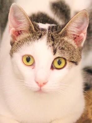 bezauberndes Katzenmädchen sucht kuscheliges Zuhause. Darf Sie ihr Köfferchen packen?