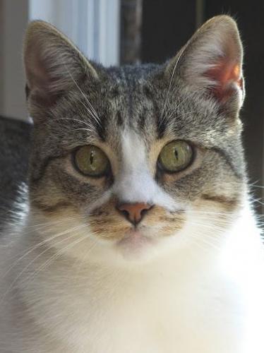 bildhübscher kleiner Katzenbub sucht nette Menschen und liebevolle Betreuung