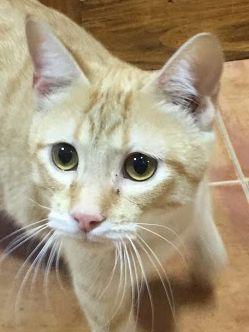 Liebevoller, verspielter Katzenbub möchte endlich zu einer Familie gehören und ein erfülltes Katzenleben führen dürfen