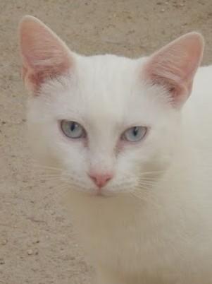 Juan hat wundervolle blaue Augen - aber sein Blick ist traurig. Er sucht seine Menschen!