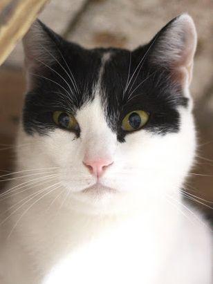 Schüchterner Katzenbub wünscht sich sehnlichst eine Familie