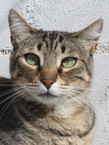 Liebevolle Katzenmama sucht sichere Hände zum Kuscheln.