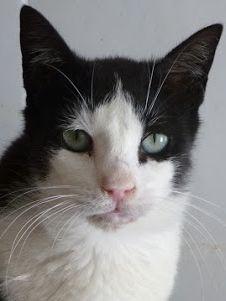 verspielter und zutraulicher Katzenbub möchte Nähe und Wärme von Menschen spüren