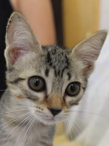 Pimienta ist ein Kätzchen zum Liebhaben