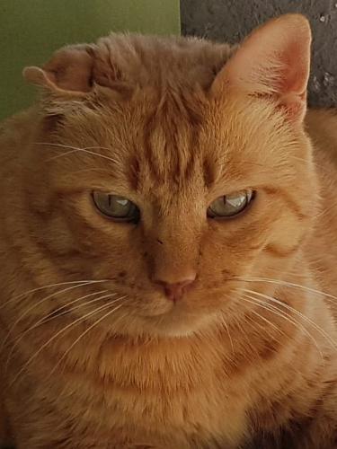 ruhiger Traumkater sucht Menschen, die er in sein Katzenherz schließen kann.