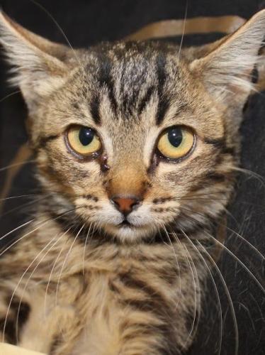 Dieser traurige Blick sagt alles! Kleines Katzenmädchen bittet inständig um Hilfe für ein Zuhause.