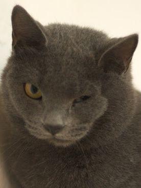 Freundliche Katzendame wartet im Tierheim sehnlichst auf ein neues Zuhause.