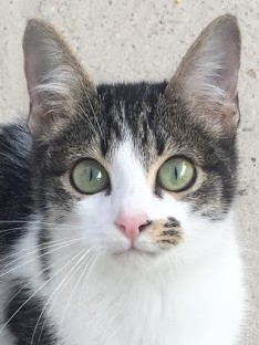 Gehandicaptes Katzenmädchen möchte ihr Köfferchen packen und sucht lieben Familienanschluss.
