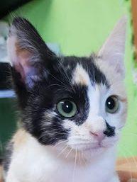 Kleines Kätzchen hält Ausschau nach seiner Familie. Es möchte schnellstens raus aus dem Tierheim.
