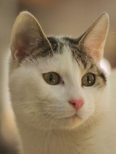 Kleiner Naseweis bringt Leben und viel Spaß in sein neues Zuhause