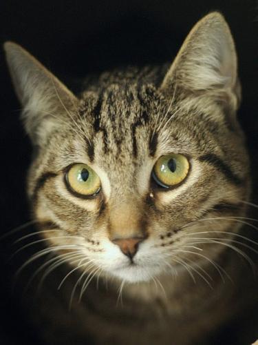 Raus aus dem Tierheim! Wunderschöner junger Tiger will in ein neues Leben starten