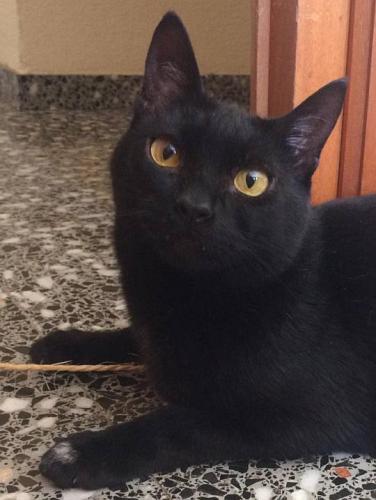Mini-Panther sucht Familienanschluss