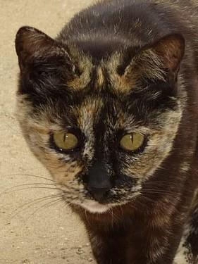 Katzenomi bittet um Hilfe. Lola lebt seit 11 Jahren im Tierheim. Wer schenkt ihr Geborgenheit und endlich ein Zuhause