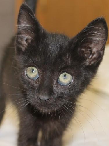 Kleiner Lausbub möchte so gerne eine Familienkatze werden und hofft auf ein tolles Zuhause bei Ihnen