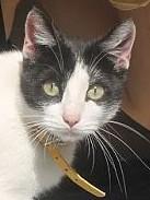Unabhängige und liebenswerte Katzendame hält Ausschau nach ihrem Zuhause.