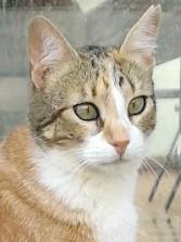 Hübsches Katzenmädchen möchte IHREN Menschen um die Beine streichen dürfen.