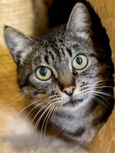 Liebenswerte Katzendame sucht Familienanschluss