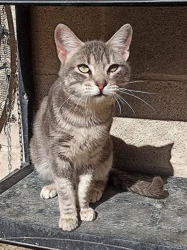 netter Katzenbub möchte Ihr Herz erobern!