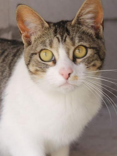 Lebenslustiges witziges Katzenmädel würde sich über ein eigenes Zuhause sehr freuen