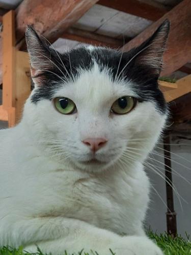 Liebenswerter Katzenbub möchte so gerne ein Zuhause. Treuer Freund als Wegbegleiter gesucht?