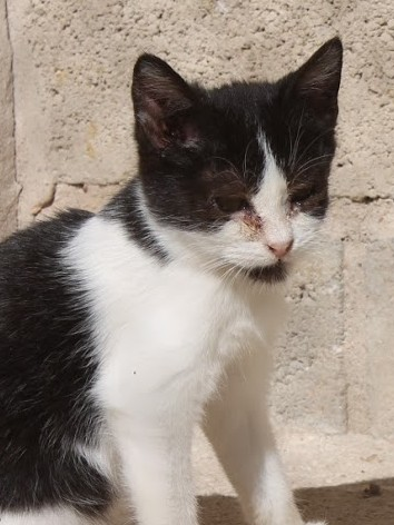 Kleine süße Katzenpuppe  braucht dringend eine Zuflucht.