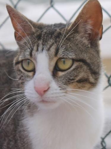 Zutrauliches Mäuschen sucht Familie. Nach vielen Entbehrungen möchte Mirra endlich ankommen dürfen.