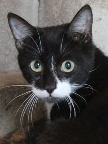 Dieser traurige Blick sagt alles! Kleines Katzenjunge bittet inständig um Hilfe für ein Zuhause.