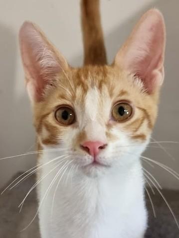 Wann beginnt für ihn das tolle Katzenleben?