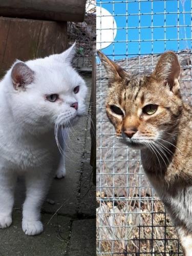 Spike und Adonis