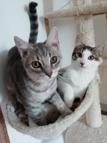 Sally und Laino in Vaterstetten