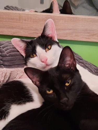 Merlin und Furiao