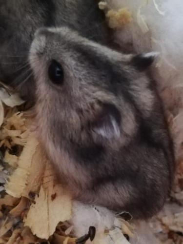 Durch und durch ein Single-Hamstermädchen!