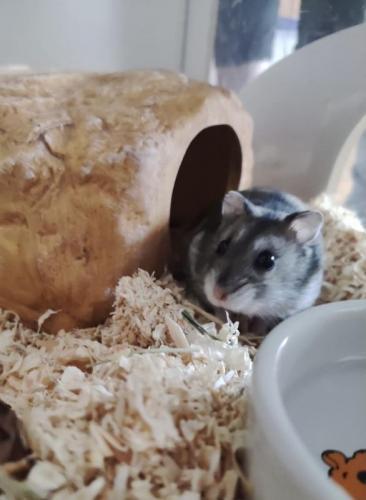 Speedy Gonzales als Hamster ;-)