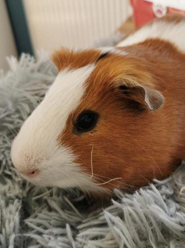 Er wurde in einem Hamsterkäfig gehalten.