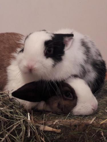 Twix und Oreo