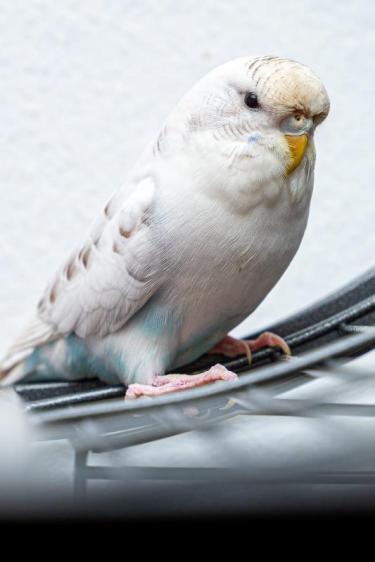 Hedwig und Hermine