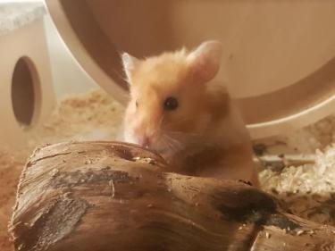 hamsterlissy.jpg