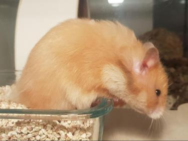 hamsterlissy2.jpg