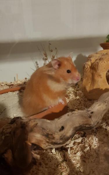 hamsterlissy4.jpg