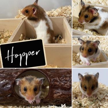 00_hopper.jpg