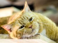 Wir arbeiten mit Pflegestellen im Großraum München. Bitte bedenken Sie, dass die Abholung der Pflegetiere immer bei München stattfinden wird. Sollte keines der genannten Gebiete für Sie zutreffen, stellen wir gerne den Kontakt zu anderen Vereinen für